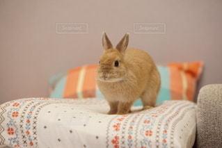 ベッドの上に座ってオレンジと白猫の写真・画像素材[1036]
