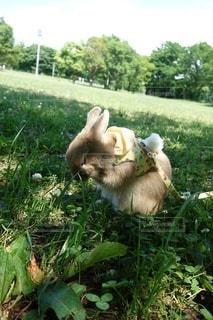 草の中に座っている犬の写真・画像素材[1007]