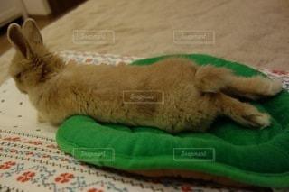 ベッドの上で横になっている猫の写真・画像素材[1002]