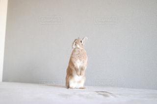 動物の写真・画像素材[373957]