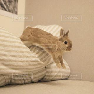動物の写真・画像素材[375374]