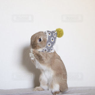 動物の写真・画像素材[380356]