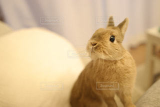 動物の写真・画像素材[383284]