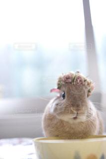 動物の写真・画像素材[415652]