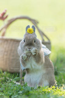 動物の写真・画像素材[508037]