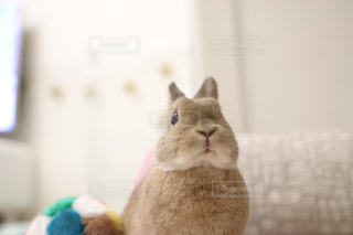カメラにポーズを鏡の前で座っている猫の写真・画像素材[1186449]