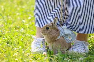 草の上に座って猫対象フィールドの写真・画像素材[1186452]