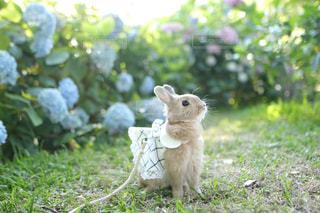 草の中の小動物の写真・画像素材[1188416]