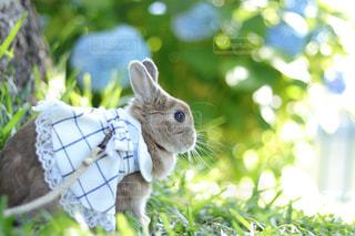 近くに庭で猫のアップの写真・画像素材[1188420]