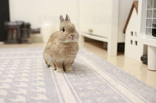 床に座って猫の写真・画像素材[1200156]