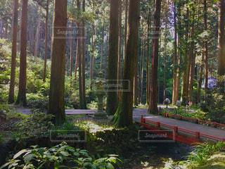 森林の写真・画像素材[292511]
