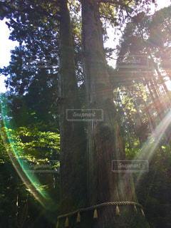 森林 - No.292514