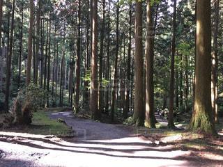 森林の写真・画像素材[292515]