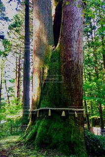 森林の写真・画像素材[292516]