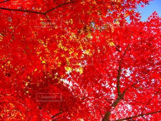 秋の写真・画像素材[292522]