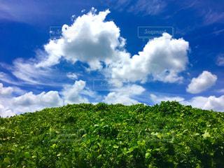 草原の写真・画像素材[293111]