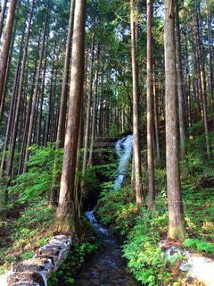 森林の写真・画像素材[300302]