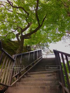 森林 - No.300304