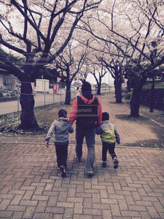 桜の写真・画像素材[335953]