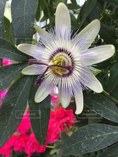 近くの花のアップの写真・画像素材[1454613]