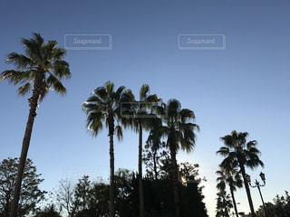 空の写真・画像素材[292088]