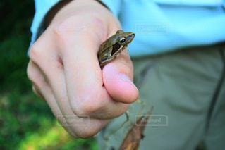 カエルの写真・画像素材[297609]