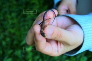 爬虫類の写真・画像素材[297612]