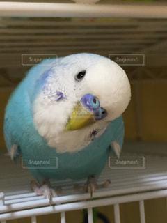 鳥の写真・画像素材[292355]