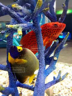 魚の写真・画像素材[292426]