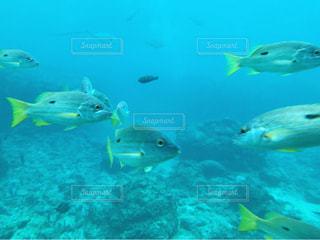 水の中の魚の群れの写真・画像素材[745024]