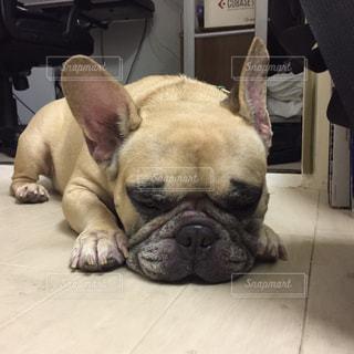 犬 - No.292835