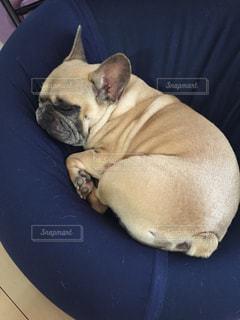 No.292853 犬