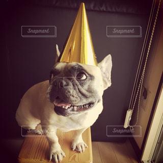 犬の写真・画像素材[314047]