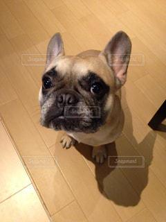 犬 - No.314060