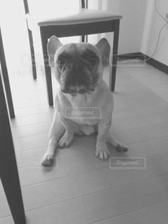 犬の写真・画像素材[314064]
