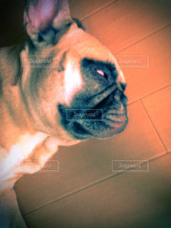 犬の写真・画像素材[314067]