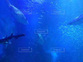 水族館の写真・画像素材[417866]