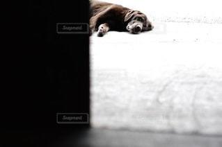 犬の写真・画像素材[1539]