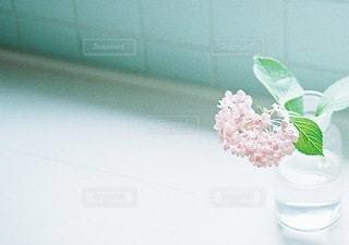 花の写真・画像素材[1501]