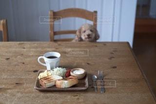 犬の写真・画像素材[1497]