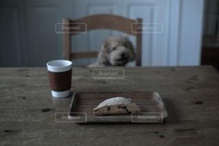 犬の写真・画像素材[1487]