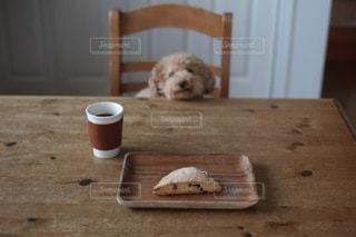 犬の写真・画像素材[1483]