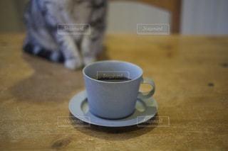 猫の写真・画像素材[1480]