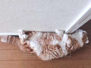 猫の写真・画像素材[1474]