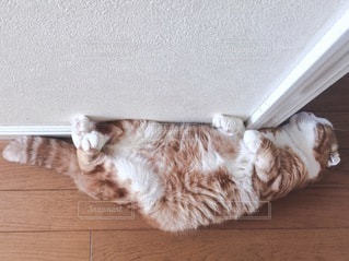猫 - No.1474