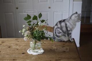 猫の写真・画像素材[1470]