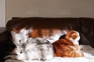 猫の写真・画像素材[1467]