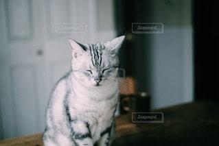 猫の写真・画像素材[1466]