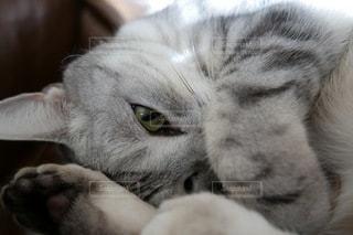 猫の写真・画像素材[1462]