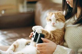 猫の写真・画像素材[1529]